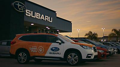 Each October, during Subaru Loves Pets month, Subaru and its retailers host or sponsor adoption events across the country to help local shelter pets find loving homes.