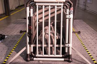 Subaru & Center for Pet Safety conducted their crash test study using weighted and instrumented crash test dogs, designed to emulate real dogs, while providing baseline performance data.
