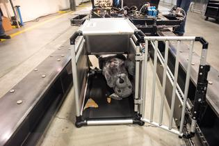 "Subaru & Center for Pet Safety examined crates and carriers claiming to be ""crash tested"" or for use in a vehicle. While some withstood the rigors of a crash, others fell short of expectations."