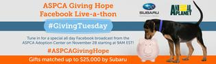 ASPCA Hosts its First Giving Hope Facebook Live-a-thon on Giving Tuesday to Raise Critical Funds for Animals in Need