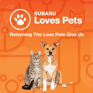 Throughout October, participating Subaru retailers nationwide will work alongside their local animal shelters to host pet supply drives for animals staying at the shelters.