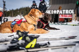 For every information form received during the WinterFest tour, Subaru will donate $1 to the Subaru National Ski Patrol Avalanche Rescue Dog Scholarship Fund, created in unison with NSP to send avalanche rescue K-9 teams to the biannual Wasatch Backcountry Rescue's International Dog School.
