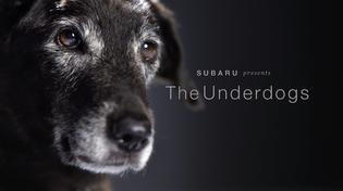 Throughout October and on #MakeADogsDay (October 22), Subaru is celebrating the Underdogs – last to be adopted shelter dogs in need of loving homes – including dogs with special needs.