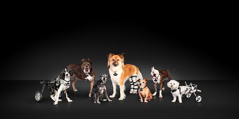 2021 Subaru Loves Pets / National #MakeADogsDay