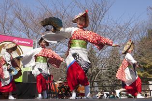 Subaru Cherry Blossom Festival - Philadelphia
