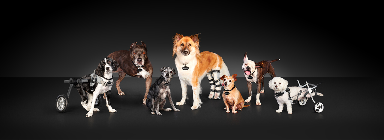 """SUBARU OF AMERICA SPOTLIGHTS HARD-TO-ADOPT SHELTER DOGS FOR THIRD ANNUAL """"NATIONAL MAKE A DOG'S DAY""""<br />"""