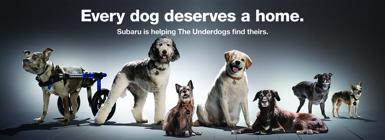 "SUBARU OF AMERICA SPOTLIGHTS LAST-TO-BE-ADOPTED SHELTER DOGS FOR THE SECOND ANNUAL ""NATIONAL MAKE A DOG'S DAY"" ON OCTOBER 22"