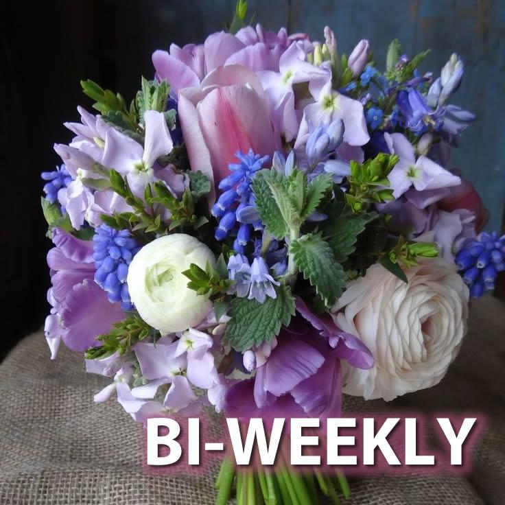 Season's Best Flower Club - Bi-Weekly