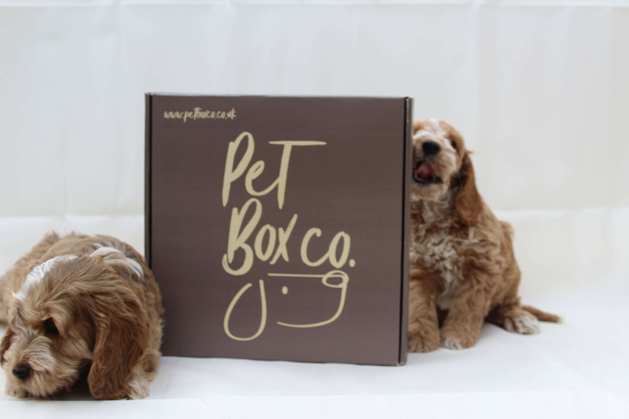 12 Month Pet Box Subscription Plan