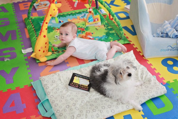 bear and his dog