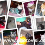 Meet the kitties from 15 and Meowing!