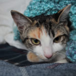 Meet Pets Overload's New Kitty Kalista!