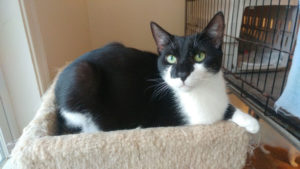 Get to Know Your Local Cat Shelter — Bingo's Foundation Ltd (Bucks County PA)