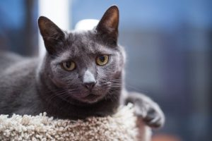 MEET YOUR LOCAL RESCUE: FORGOTTEN ONES CAT RESCUE from Richmond Hill, Ontario