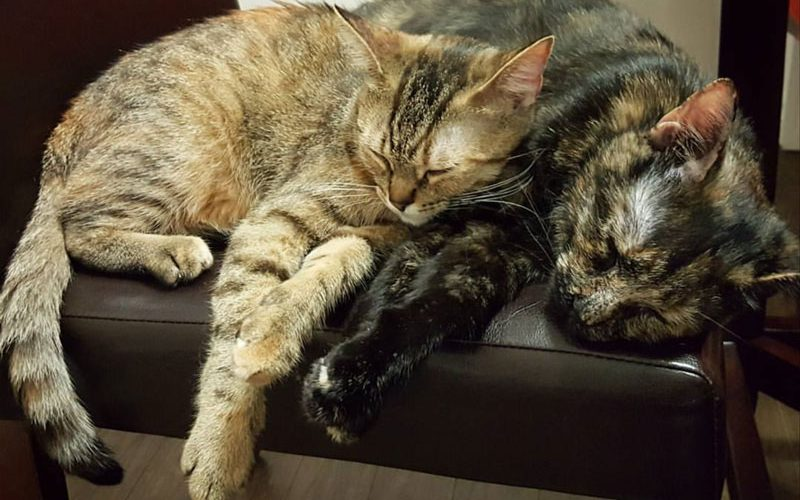 Meet the 2sleepy_kitties from Instagram!