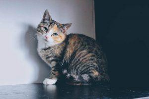 A Whole Lotta Lovin' Fundraiser – Cat Adoption Fundraiser (Photos Included!)