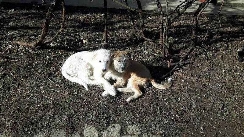 Debbie Mowl's experience with EverMore Dog Rescue