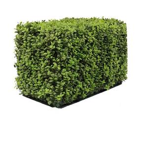 Buxus hedge 1m