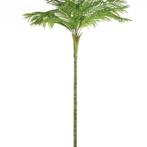 Areca single stem supazaar.tl9224 min