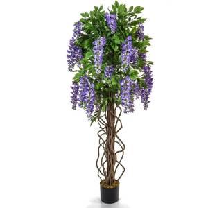 Purple wisteria primary