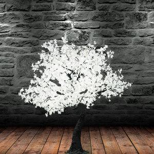 1.5m white maple