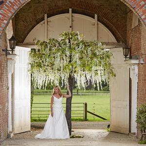 Wisteria tree bride supazaar