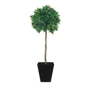 Bay tree lollipop planter supazaar