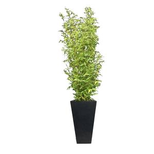 Medium bamboo planter supazaar hire