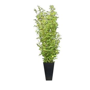 Large bamboo planter supazaar hire