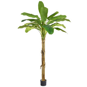 Banana tree hire 240cm supazaar