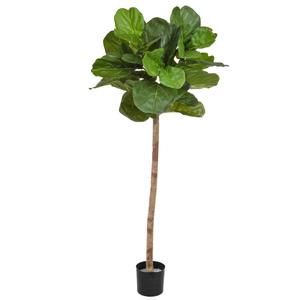 Ficus lyrata 170 tree hire db supazaar