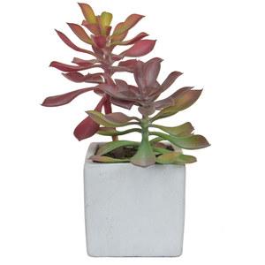 Succulent small plant hire supazaar
