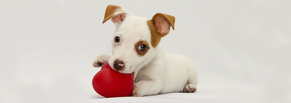 Estudo revela que o coração do cachorro bate em sincronia com o do tutor