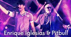 Image Iglesias Pitbull