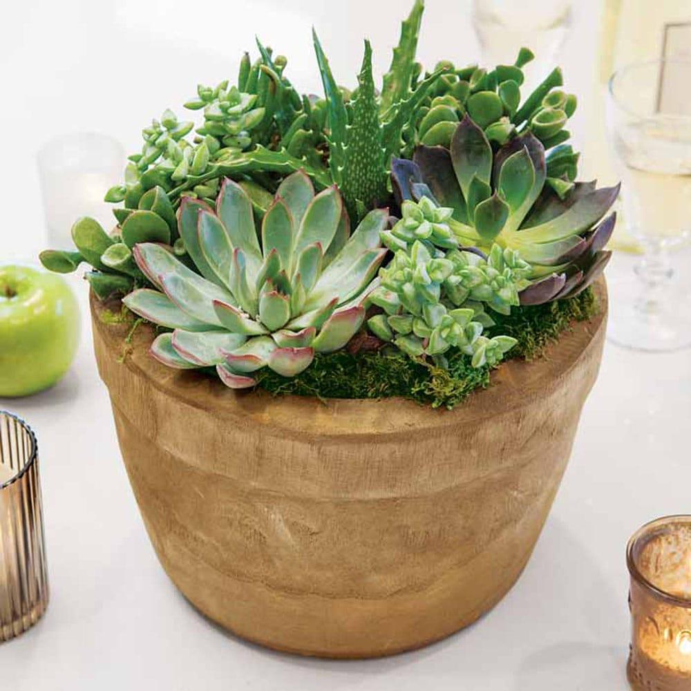 Woodridge Succulent