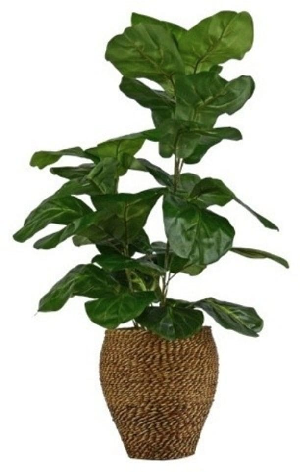 Mauna Faux Fig Plant in Rope Basket
