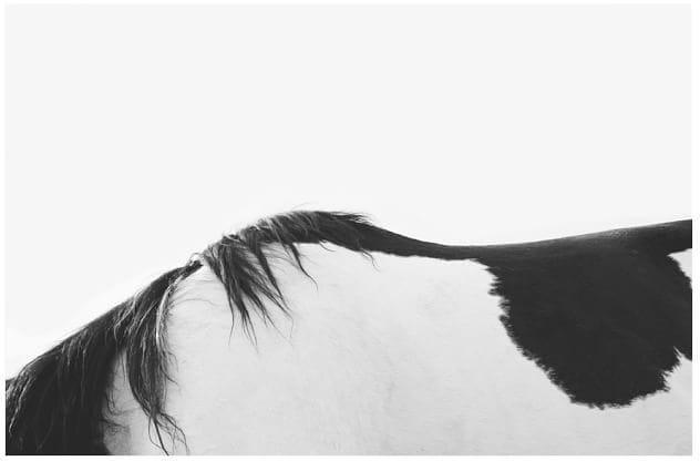 Horseback Print