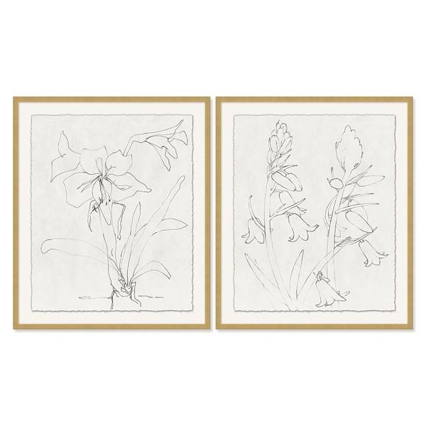 Aerin floral sketch o