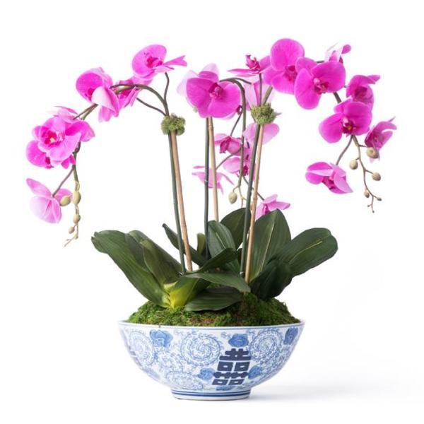 Orchids 02 grande