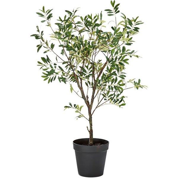 Olivetree4fts19