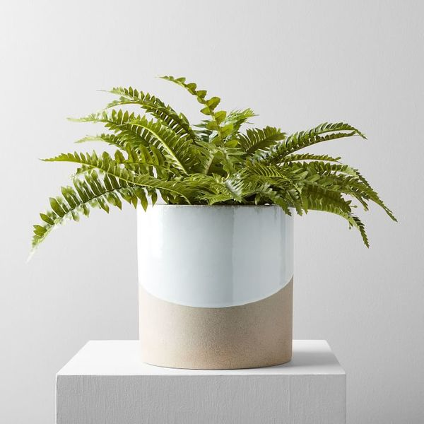 Faux potted green fern plant o