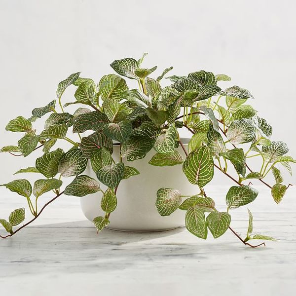 Faux potted fittonia houseplant 1 o