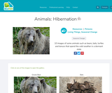 Animals: Hibernation