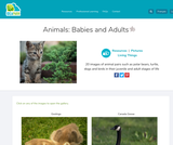 Animals: Babies and Adults