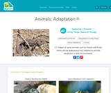 Animals: Adaptation
