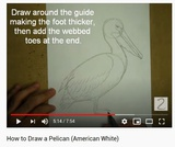 How to Draw a Pelican (American White)
