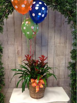 A 2 Star Customer Reviewed Flower Arrangement Designed by House of Blooms in Sugar Land, TX