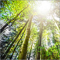Carbon Offset Forestry