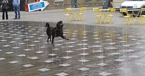 dog-plays-in-fountain