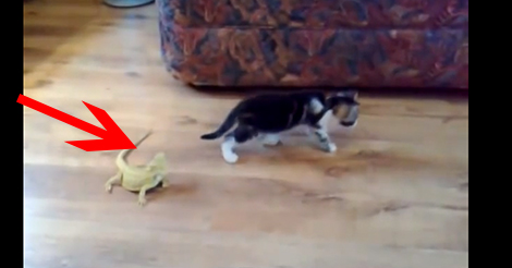 kitten-lizard-attack